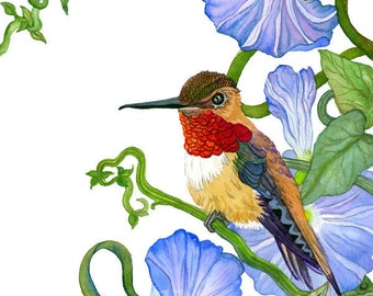 Ruby Throated Hummingbird, Archival Print of Original Watercolor, you choose size