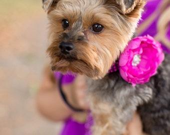 Magenta Rhinestone Flower Dog Collar,  Dog Collar Flower: Diva Pink/ Black Rhinestone with Orchid Rani
