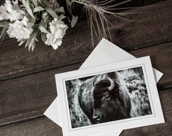 B&W Buffalo Fine Art Photography Print Notecard, Wyoming, Grand Tetons, black and white