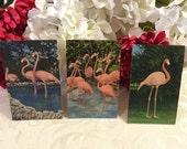 Pink Flamingos, 3 Vintage Postcards, Linen, c 1950s, Tropical Birds, Florida Paradise, Exotic Birds, Cottage Chic