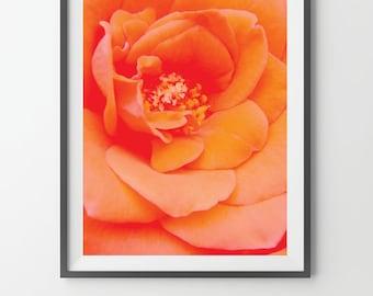 Primrose Digital Print