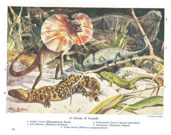 Lizard Frilled Gila Monster Iguana Chameleon Gecko Reptile Print 1918 Original Natural History Print Wall Art Home Decor Vintage Print