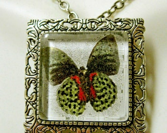 Butterfly convertible pendant or brooch with chain - WAP35-013