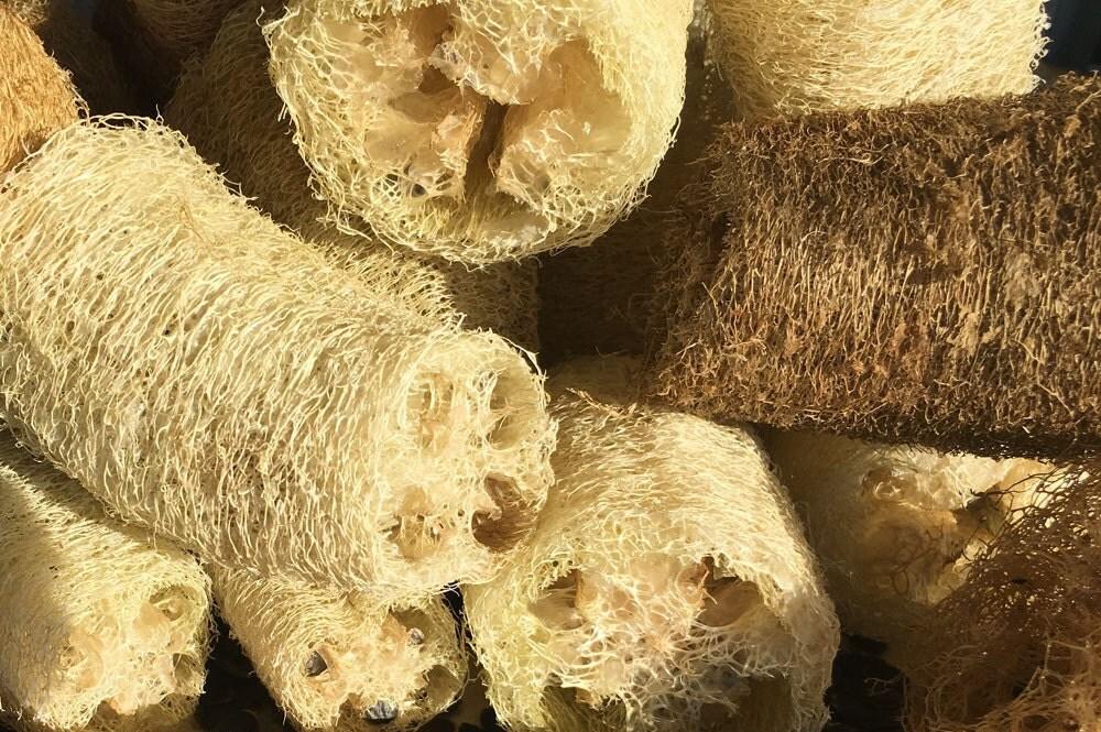 Seeds Loofa Luffa Loofah All Natural Scrubbing Sponge