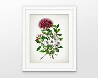 Wine Red And White Flower Print - Flower Art - Botanical Print - Colorful Flower Decor - Flower Art - Single Print #1667 - INSTANT DOWNLOAD