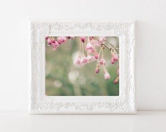 Spring Flower Photography - Cherry Blossom Print - 5x7 Photo - Pink Flowering Tree - Shabby Chic Decor - Weeping Cherry Tree Art Print
