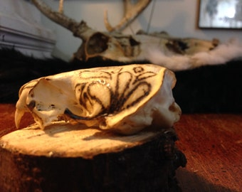 Decorative Mink Skull
