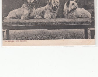 Trio Of Skye Terriers Sitting On An Elegant Antique Bench,Tuck Postcard,Unused,Photograph