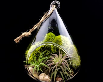 Glass Tear Drop Terrarium Kit, River Stones, Chartreuse Moss