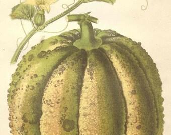 1875 Antique MELON Print FRUIT Horticulture Garden Kitchen Original Chromolithograph