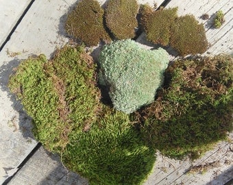 live moss GET MORE in a sq. ft. then in quart bag!