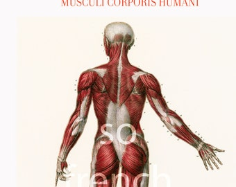 """11 X 14"""" Antique Anatomy Muscles Human Body Poster Bourgery Medicine Wall Art"""