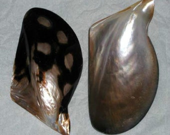 """Polished Black Lip Mother Of Pearl 4""""- 5"""" Oyster Half Seashell ~ 1, 3, 6 Pcs. ~ FREE SHIPPING ~"""
