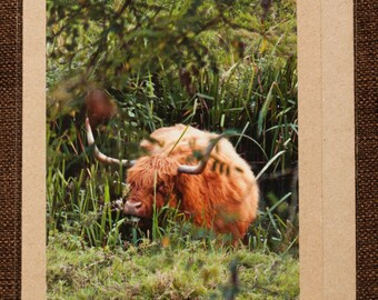 Greetings Card: A Highland FIlling