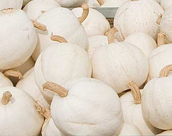 Pumpkin Casper - 10 Seeds - White Pumpkin - Cucurbita Pepo