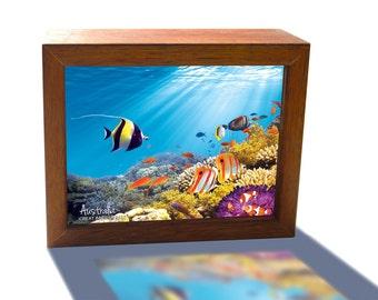 Great Barrier Reef under water Australia