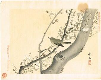 """1894, Japanese Woodblock print, antique, Matsumura Keibun, """"Japanese Bush Warbler"""""""