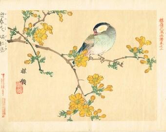 "1893, Japanese Woodblock print, antique, Kono Bairei, ""Winter jasmine, Java sparrow"""
