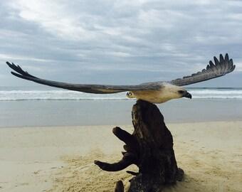 Australian Sea Eagle Replica