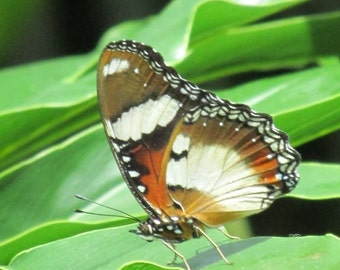 Orange and white butterfly on green