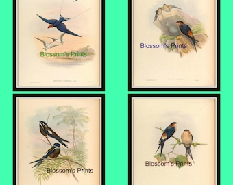 Set of four bird prints from the 1800's Plates 49,50,51,and 52