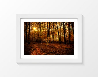 "Sacred golden space / Forest trees leaves gold sun autumn printable art home decor downloadable art to print yourself / A3 and 11"" x 17"""