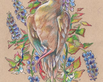 Mourning Dove - Original Illustration