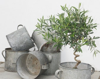 Antique Zinc Garden Planters