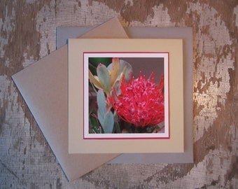 Leucadendron and Proteaceae, handmade, greeting card, blank, square, photo