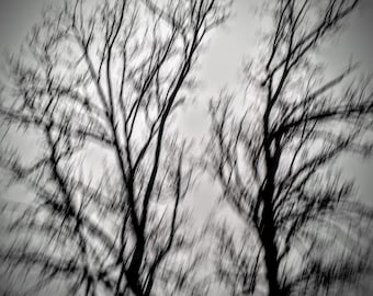 Wintry- FREE SHIPPING. Surreal, Grey, Black, Blur, Trees, Winter, White, Creepy