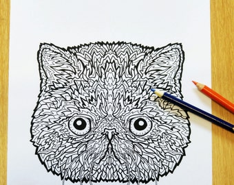 Exotic Shorthair Cat Colouring Sheet - Complicated Cats - Complicated Coloring