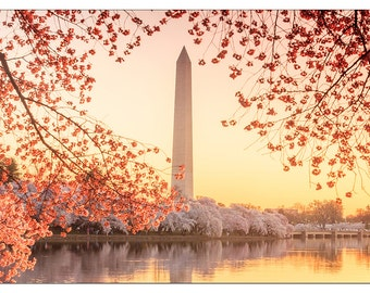 PS0377 Poster Print Washington Memorial during the Cherry Blossom Festival