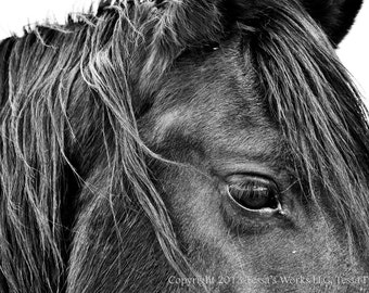 The Stallion 8x10 glossy print