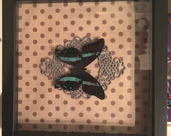 Black & Blue Butterfly Shadowbox Display