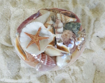 Clam Shell with assorted small shells, Sea Shells, Natural Shells