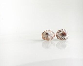 Mini Ophihi Stud Earrings, Hawaiian Shell