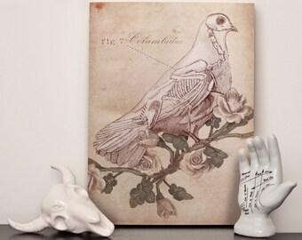 "Dove Skeleton - 16x12"" (A3) Canvas"