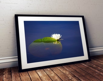 water lily, lily pad, okefenokee swamp, folkston, georgia, reflection, flower, photography, fine art print