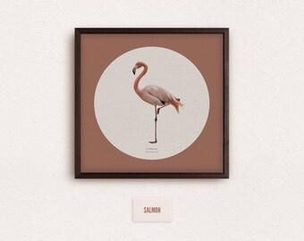 Flamingo (Phoenicopteridae) - zoological illustration, vintage style, scientific drawing