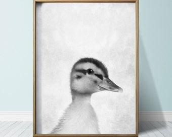 Duckling Farm Animals Duck Print Duck Poster Wall Art Print Animal Print Duck Art