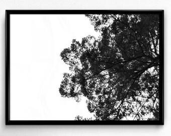 Dark Trees Light Sky - 12x18 Photography Print