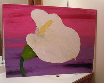 Giant calla Lilly