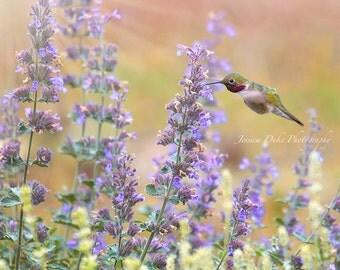 Hummingbird, Hummingbird Photo, Southwest Art, Fine Art Photography, Hummingbird Art, Hummingbird & Flowers, Pastel Photo, Catmint, Garden