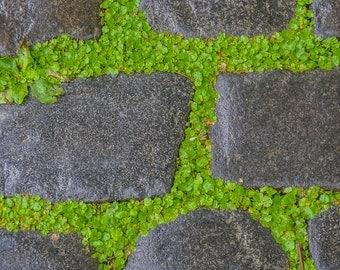 Cobblestone in Green