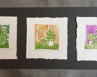 Original Linocut- 'Pot Plants' set of 3