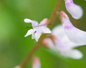 Macro flower print