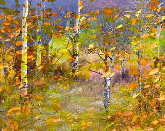 TREES & AUTUMN LEAVES,  Forest of, and painterly, warm, inviting