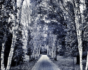 Somber Path, Fine Art Print, Large Art, Landscape Photography