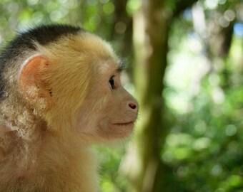 Monkey Buisness  Digital Download