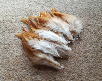 50 natural rooster feathers